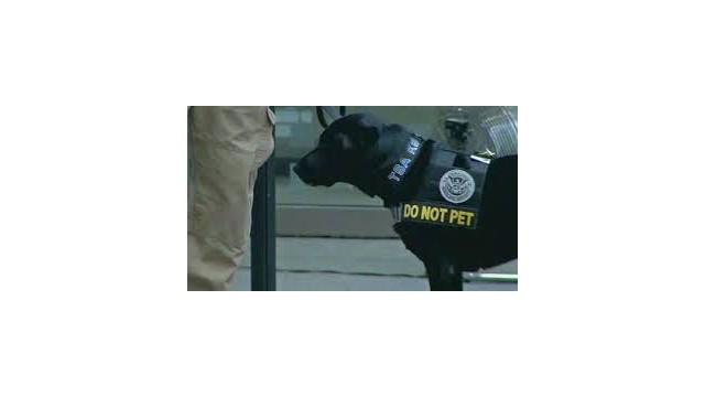 TSA-dog.jpg