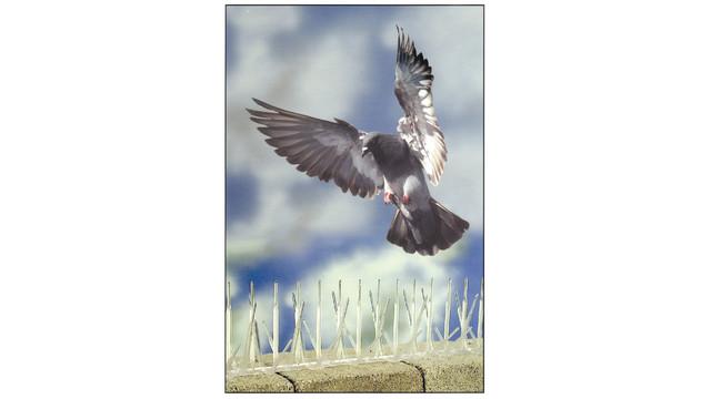 birdspike2000_10136992.tif
